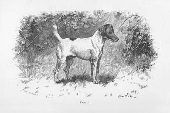 Result galt als herausragender Fox Terrier seiner Zeit (aus: The Fox Terrier, 1890)