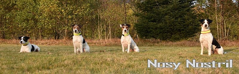 Nosy Nostril - Parson Russell Terrier (KfT / VDH / FCI)